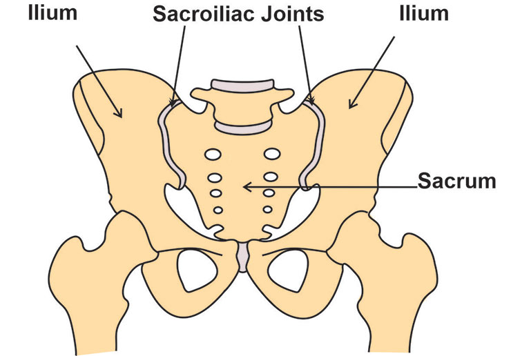Image representing SACROILIAC JOINT