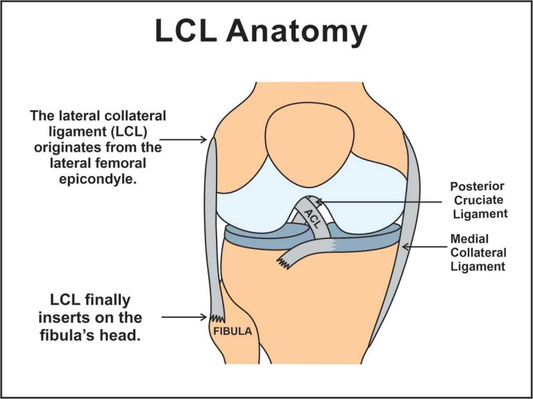 image representing lateral or fibular collateral ligament anatomy