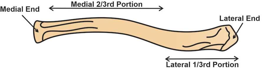 clavicle-anatomy