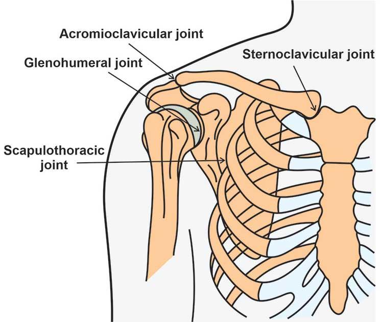 shoulder-joints